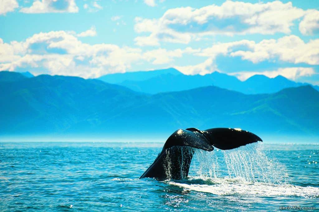 Schüleraustausch Neuseeland Blog