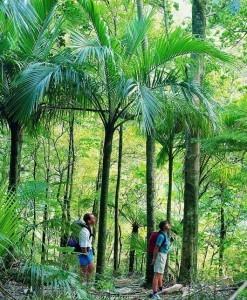 Kahurangi-Nationalpark