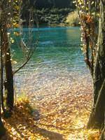 Neuseeland Herbst