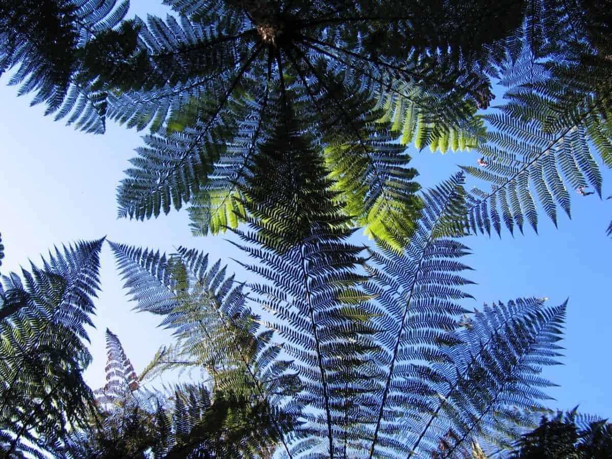 Englischkurs in Coromandel Neuseeland